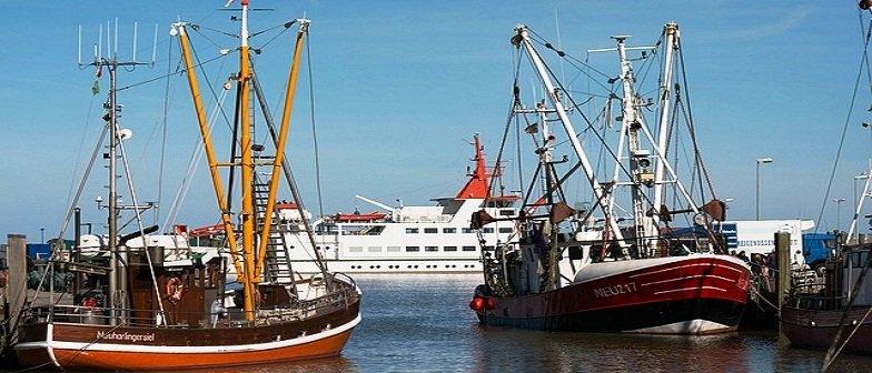 profissão em Engenharia de Pesca e Bacharelado