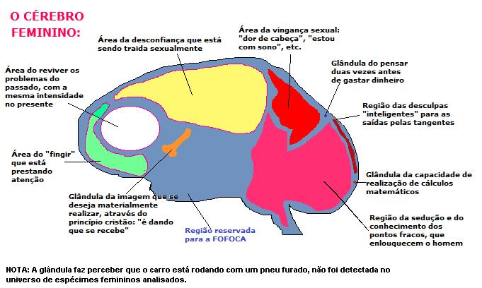 Hora do recreio, cérebro feminino. Vestibular1