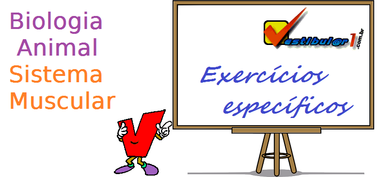 Biologia Animal Sistema Muscular exercícios específicos enem vestibular