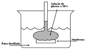 Simulado Express 7 fenômeno da Osmose Simulado gabarito vestibulares