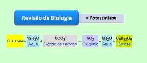 Revisão de Biologia: Fotossíntese por Vestibular1