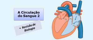 A Circulação do Sangue 2 Biologia Vestibular1