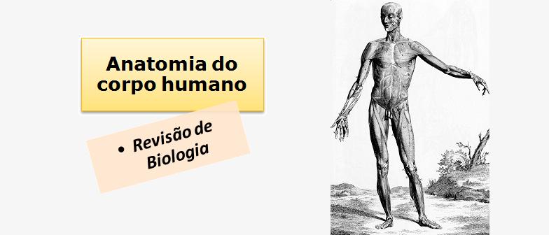 Biologia: Anatomia do corpo humano por Vestibular1