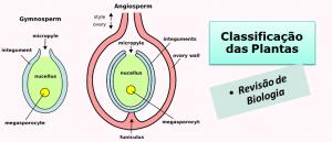 Classificação das Plantas Biologia em Vestibular1