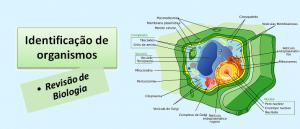 Identificação de organismos Revisão de Biologia Vestibular1