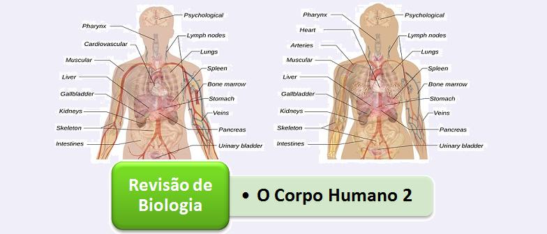 Corpo Humano parte Dois Biologia Vestibular1
