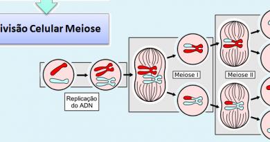 Divisão Celular Meiose Biologia Vestibular1