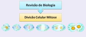 Divisão Celular Mitose Biologia Vestibular1
