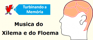 Musica do Xilema e do Floema Vestibular1