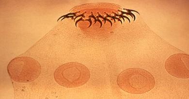 Parasitologia Revisão de Biologia Vestibular1