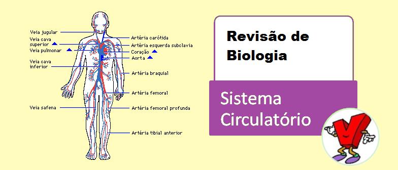 Sistema Circulatório Revisão de Biologia Vestibular1