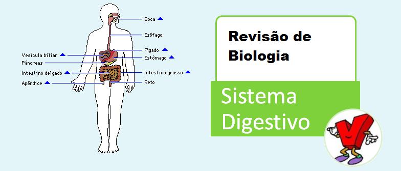 Sistema Digestivo Revisão de Biologia Vestibular1