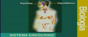 Vídeo Aula Biologia Sistema Endócrino 1de2. Vídeo aulas para Enem e Vestibular