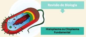 Biologia Celular Hialoplasma ou Citoplasma Fundamental Vestibular1
